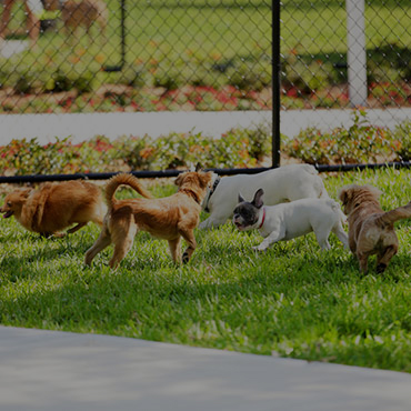 Large Dog Park at Villa de Guadalupe Apartments
